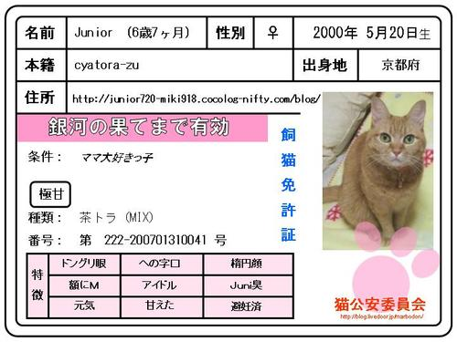 Juniorの飼猫免許証