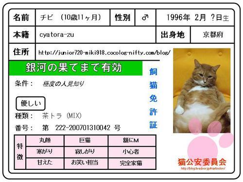 チビの飼猫免許証