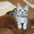2007_junichibi1610113