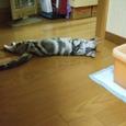 2007_junichibi1640194