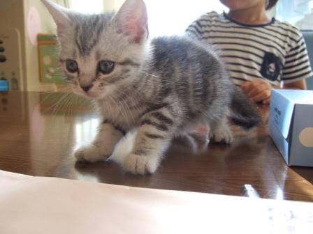 2007_junichibi1300266