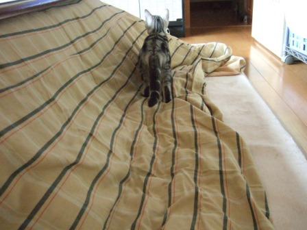 2007_junichibi1510108