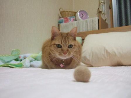 2007_0424junichibi840075