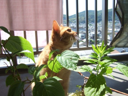 2007_junichibi940378