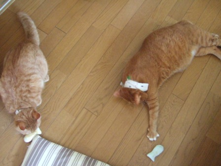 2006_0921junichibi50032