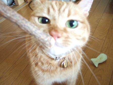 2006_0921junichibi50035