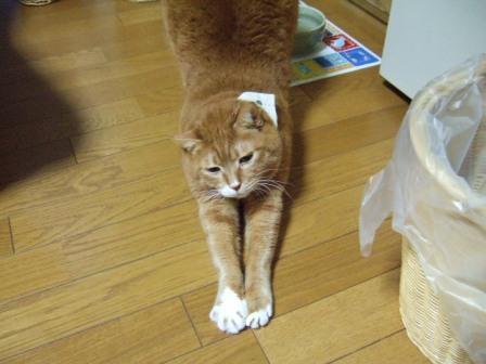 2006_1005junichibi120039