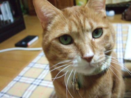 2006_1124junichibi370417