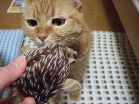 2006_1201junichibi390044