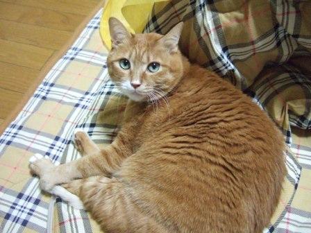 2006_1205junichibi400191