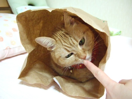 2006_1217junichibi460057