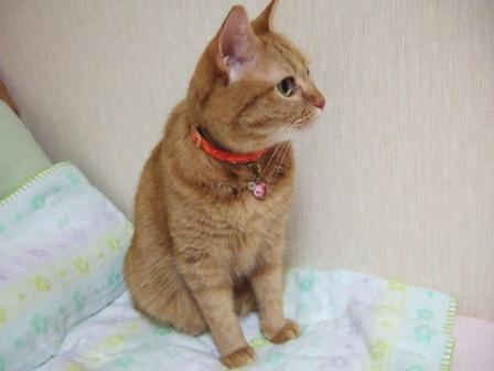 2006_1217junichibi460128