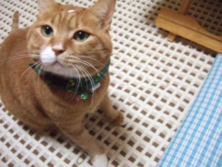 2006_1217junichibi460133