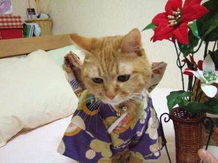 2006_1223junichibi470038