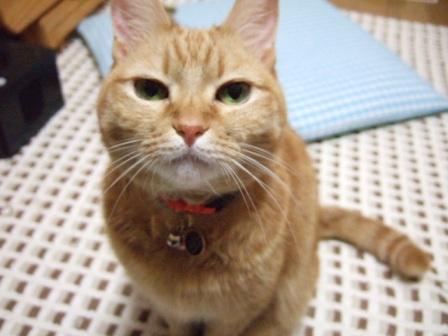 2006_1225junichibi480107