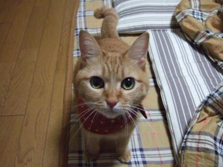 2006_1225junichibi480123
