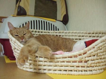 2007_junichibi1140019