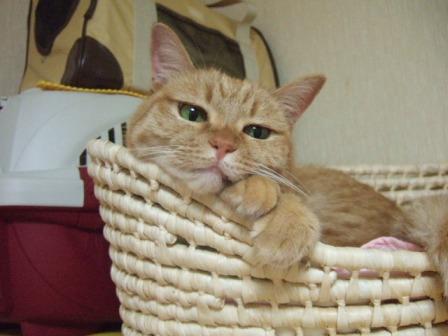 2007_junichibi1140021