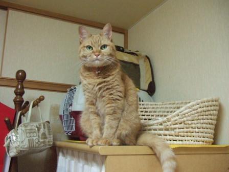 2007_junichibi1140089