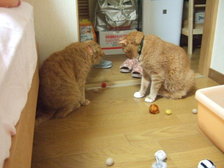 2007_junichibi1160112