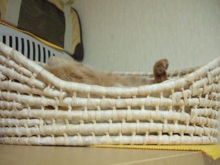 2007_junichibi1180029