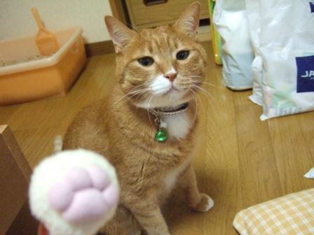 2007_junichibi1200085
