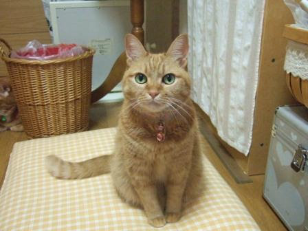 2007_junichibi1200035_2