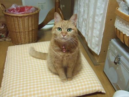 2007_junichibi1200036