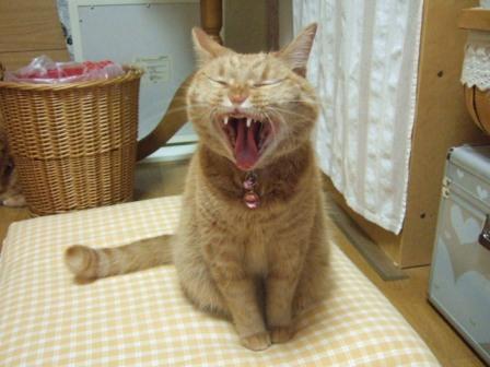 2007_junichibi1200037