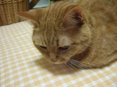 2007_junichibi1200043