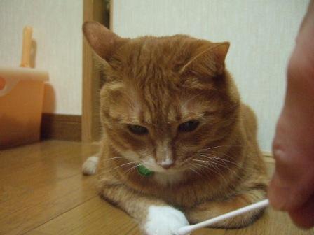 2007_junichibi1220019