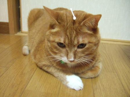 2007_junichibi1220022