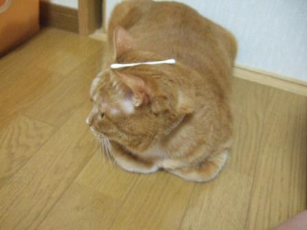 2007_junichibi1220023