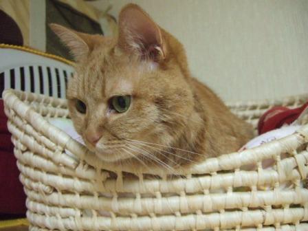 2007_junichibi1220053