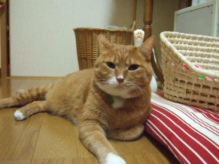 2007_junichibi1250103