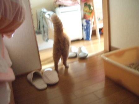 2007_junichibi1280198