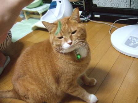 2007_junichibi1260164