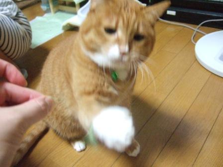 2007_junichibi1260172