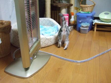 2007_junichibi1400195