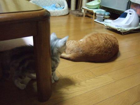2007_junichibi1420052