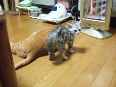 2007_junichibi1420053