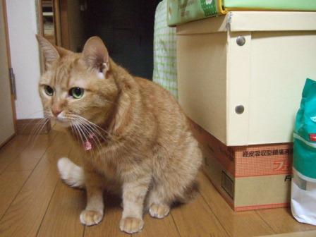 2007_junichibi1420058