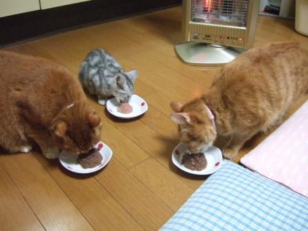 2007_junichibi1450246