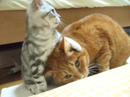 2007_junichibi1460064