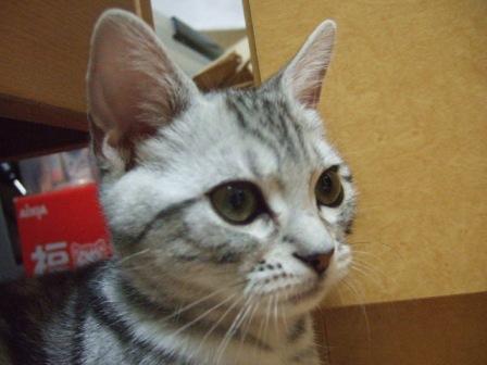2007_junichibi1480042