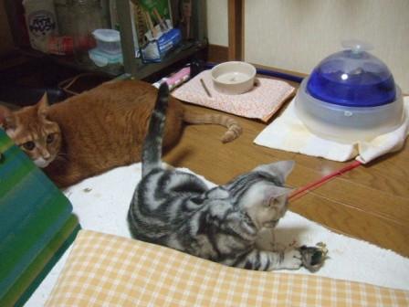 2007_junichibi1500098