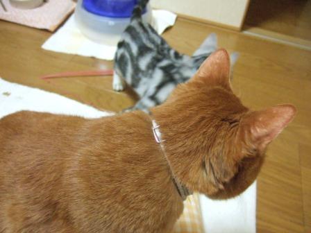 2007_junichibi1500102