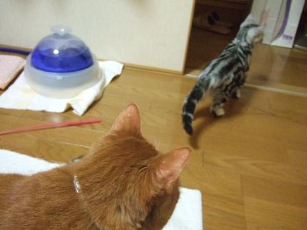 2007_junichibi1500103