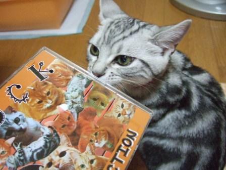 2007_junichibi1560132