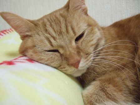 2007_junichibi1570140